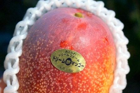 和歌山県産大嶺農園鉢植えマンゴー